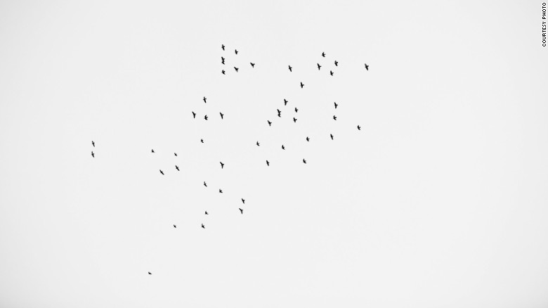 49 Birds in the Sky